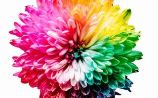 quiz Rainbow flower
